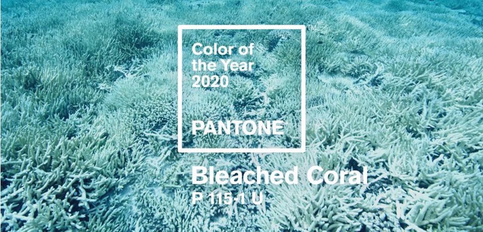 Цвет 2020 года: оттенок выбеленного коралла