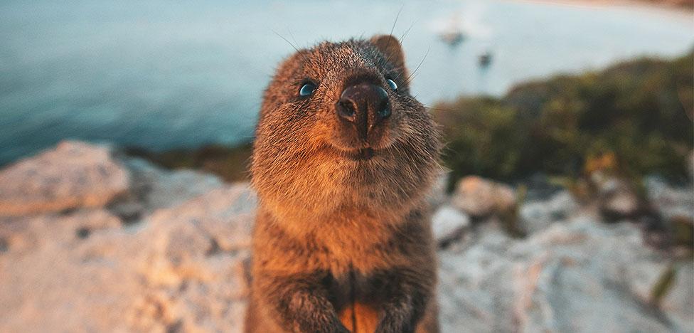 Веселые животные: лучшие снимки Comedy Wildlife Photography Awards 2019