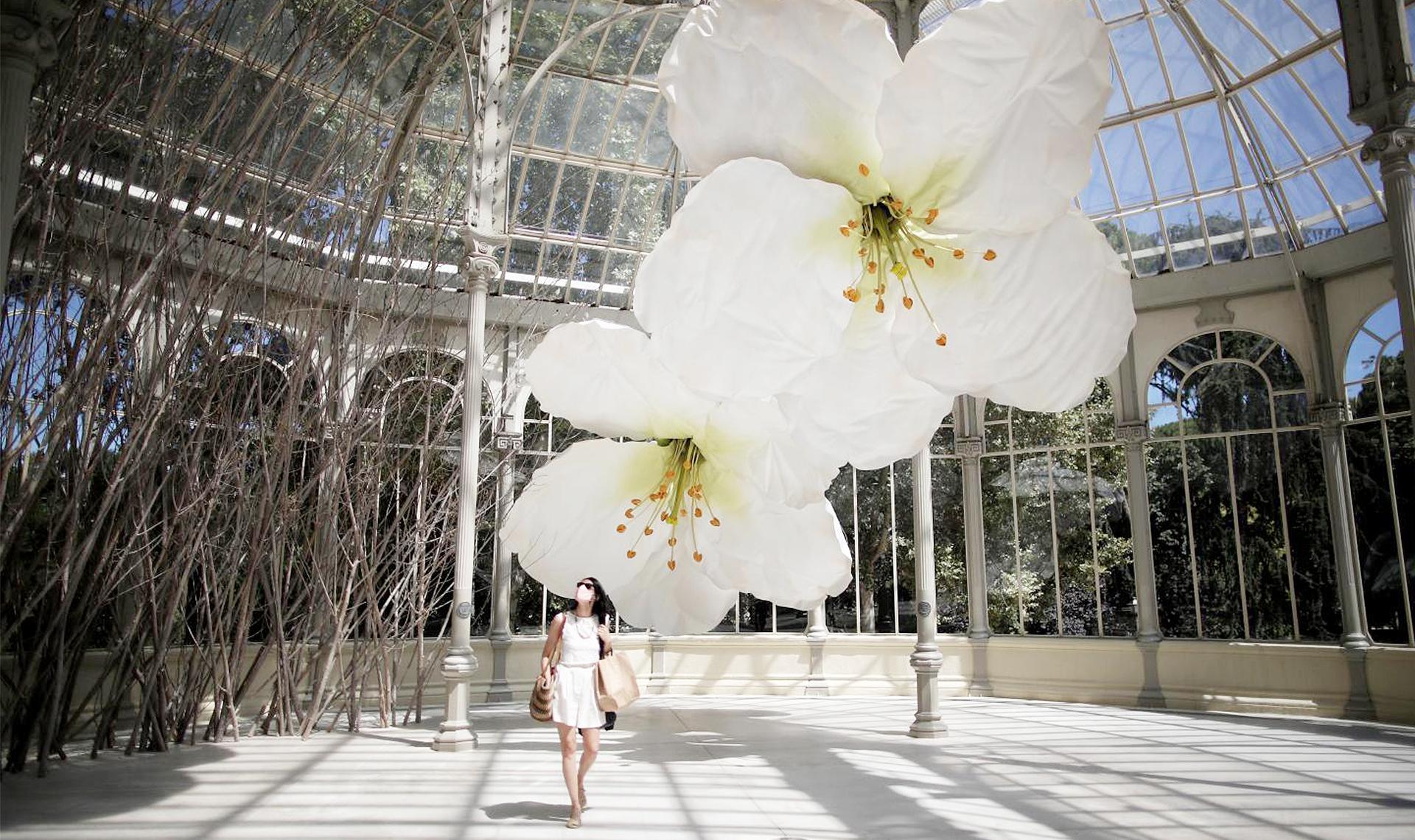 Цветы Петрита Халилая в Хрустальном дворце
