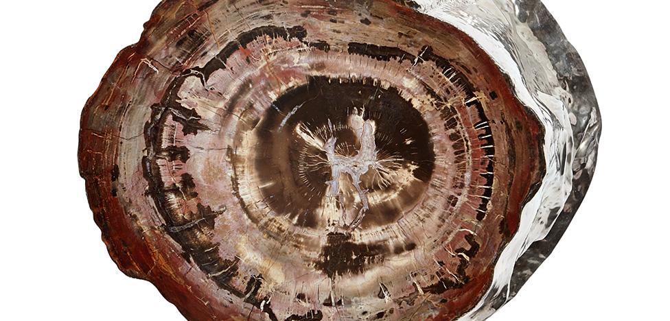 Винтаж+Wild: кофейный столик из окаменелого дерева