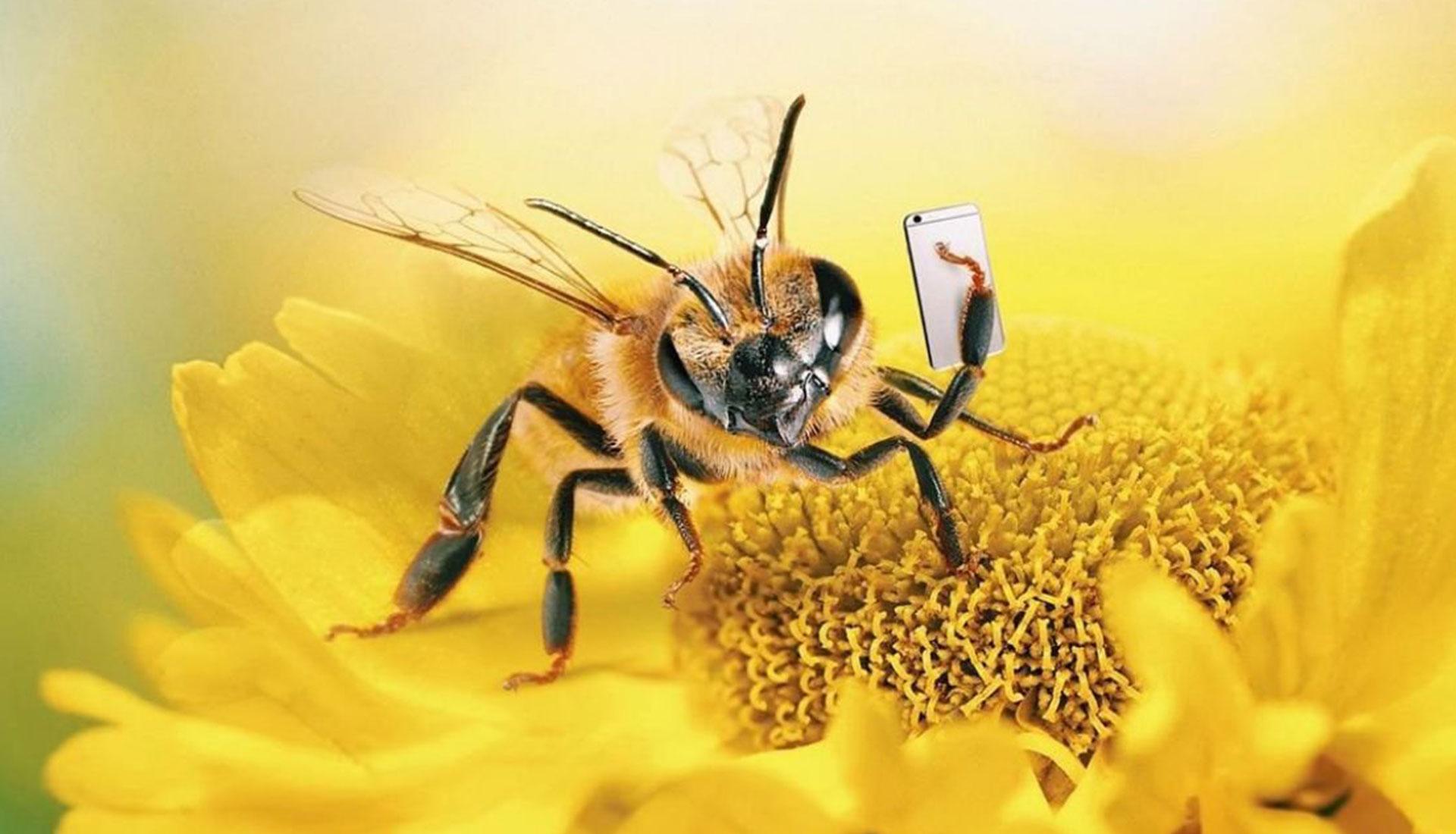 Пчела-инфлюенсер с 137 000 подписчиков