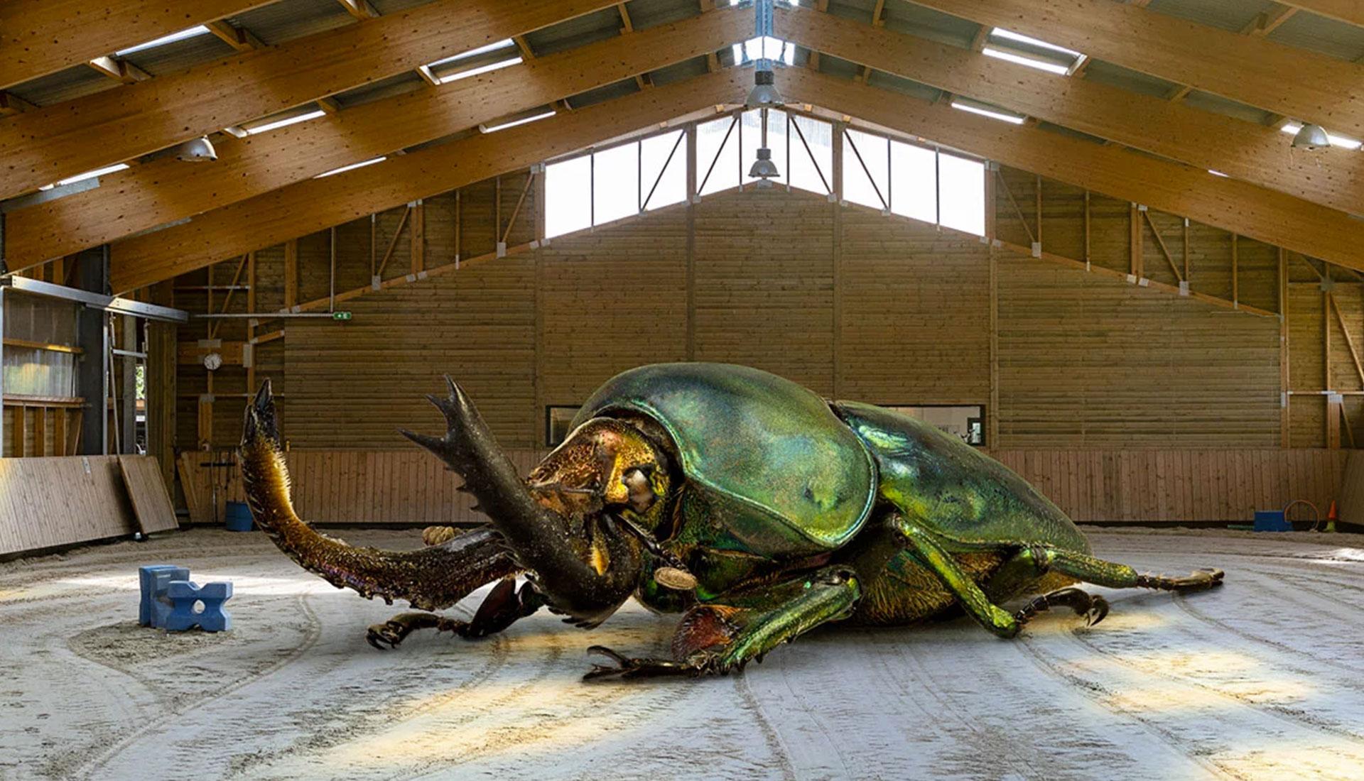 Рено Марион и фотографии невероятных насекомых