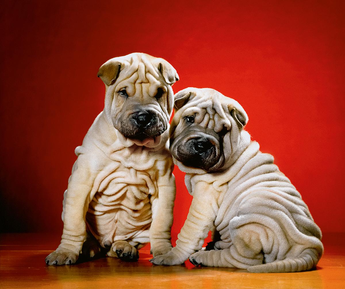 Красивые фотографии щенков фото