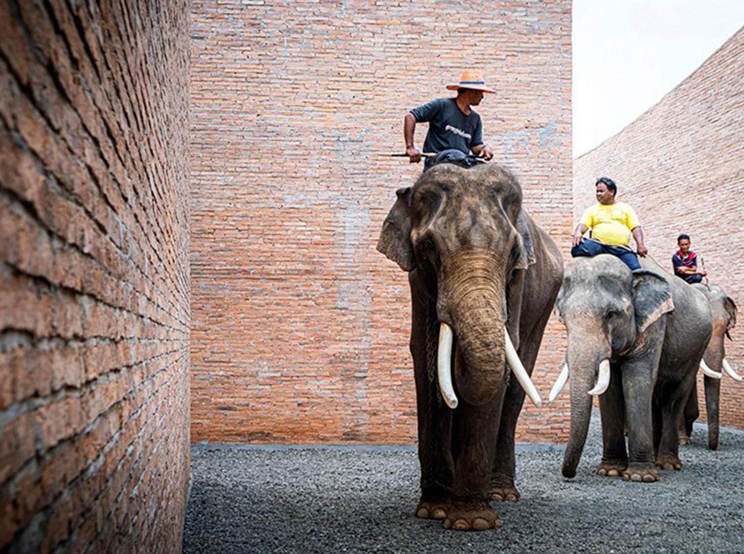 Музей слонов Таиланд фото