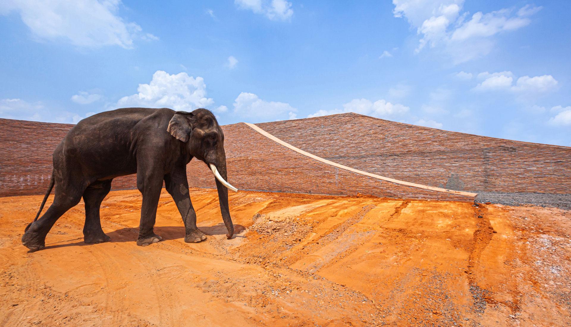 Музей слонов в Таиланде фото