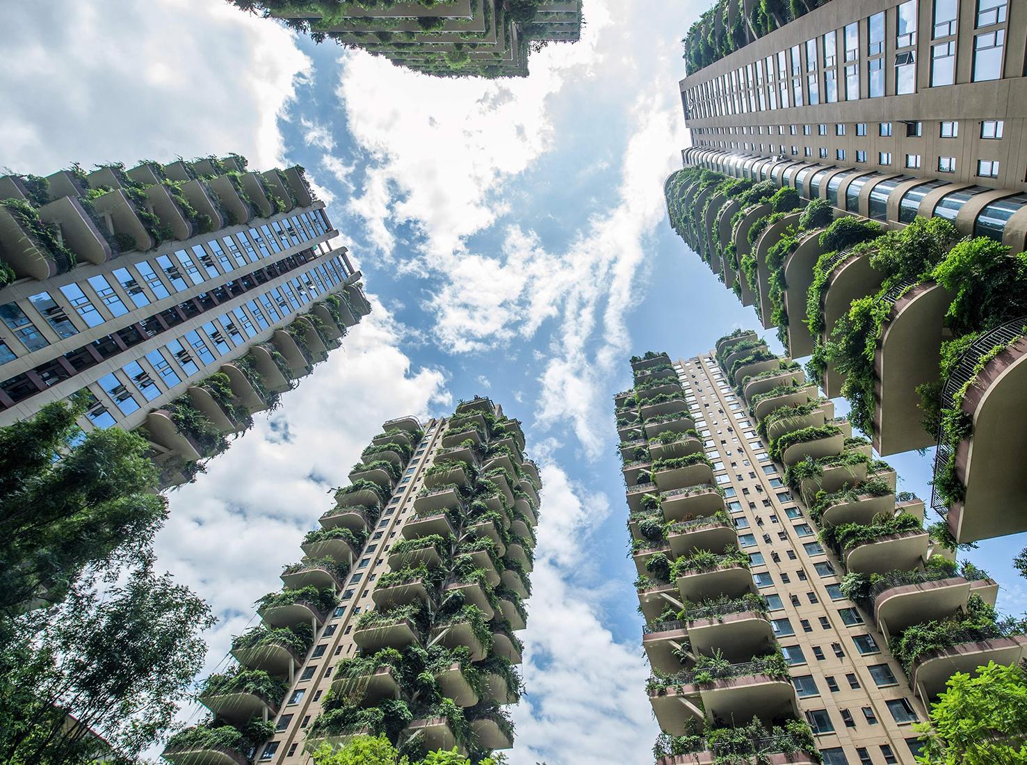 Вертикальный лес фото