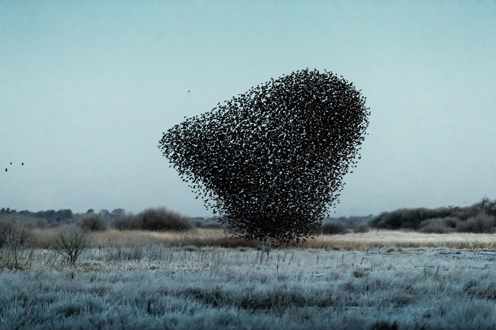 Стаи птиц фото
