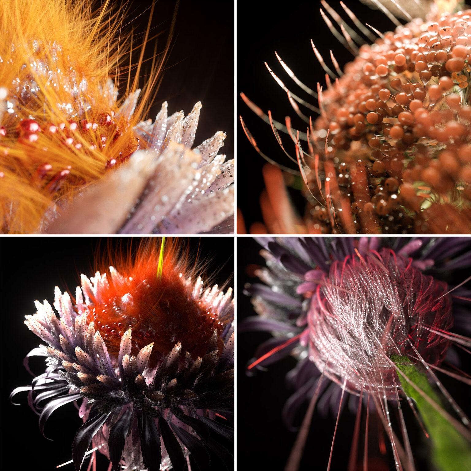 Shy Studio фотоФракталы в природе фото