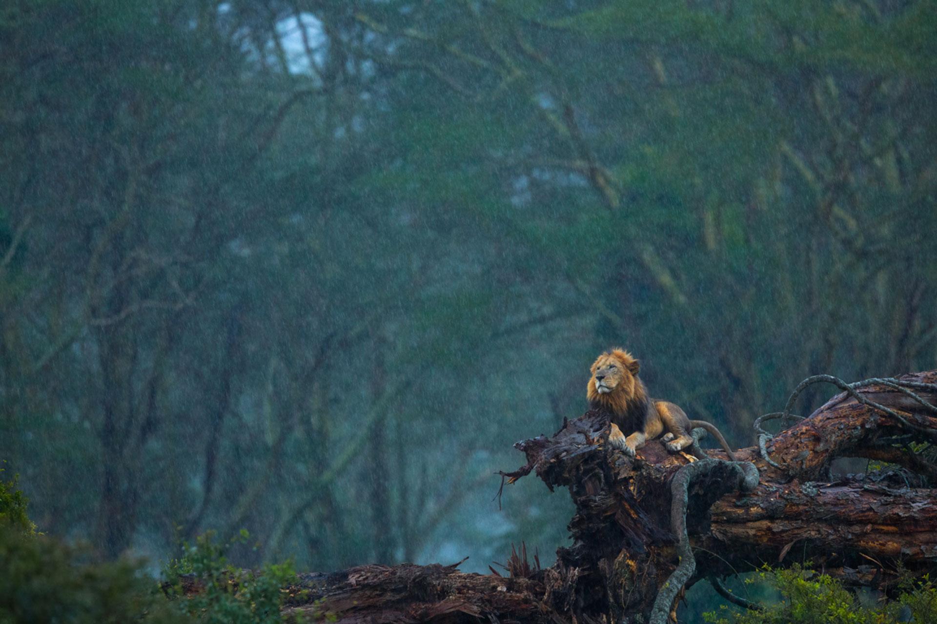 Удивительные фотографии природы фото