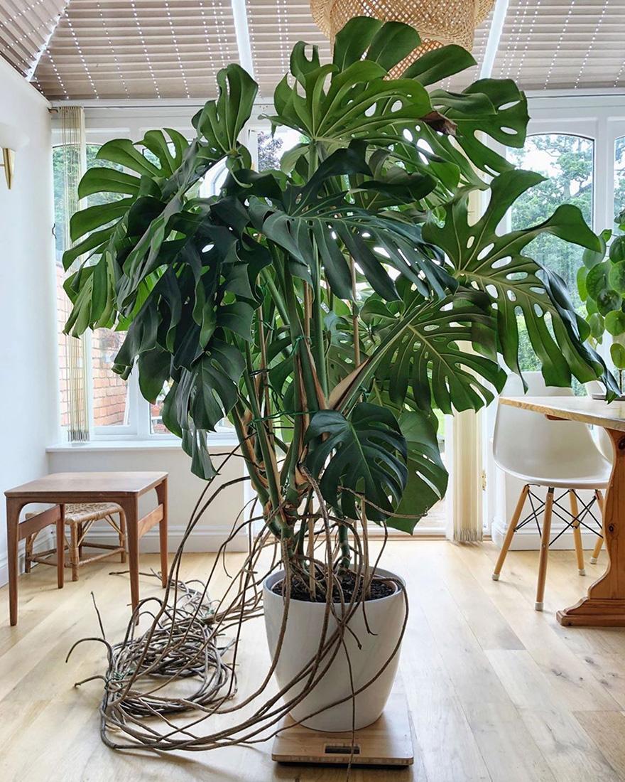Растения в интерьере фото