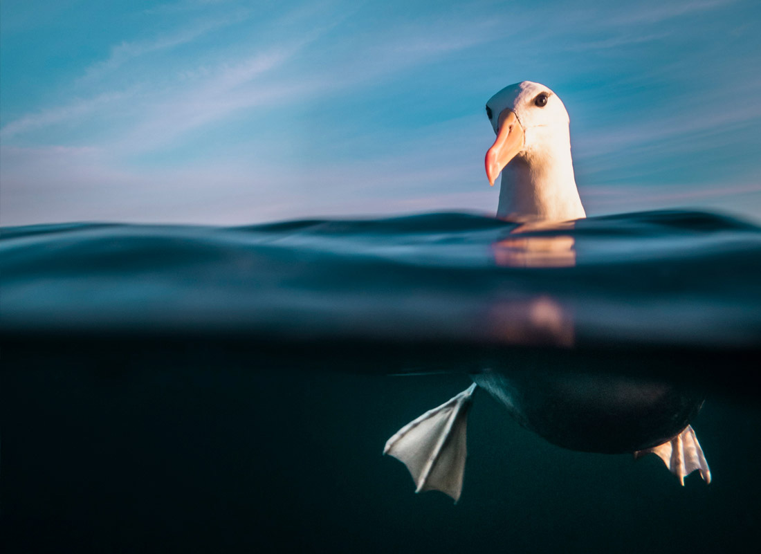 Подводная фотография фото