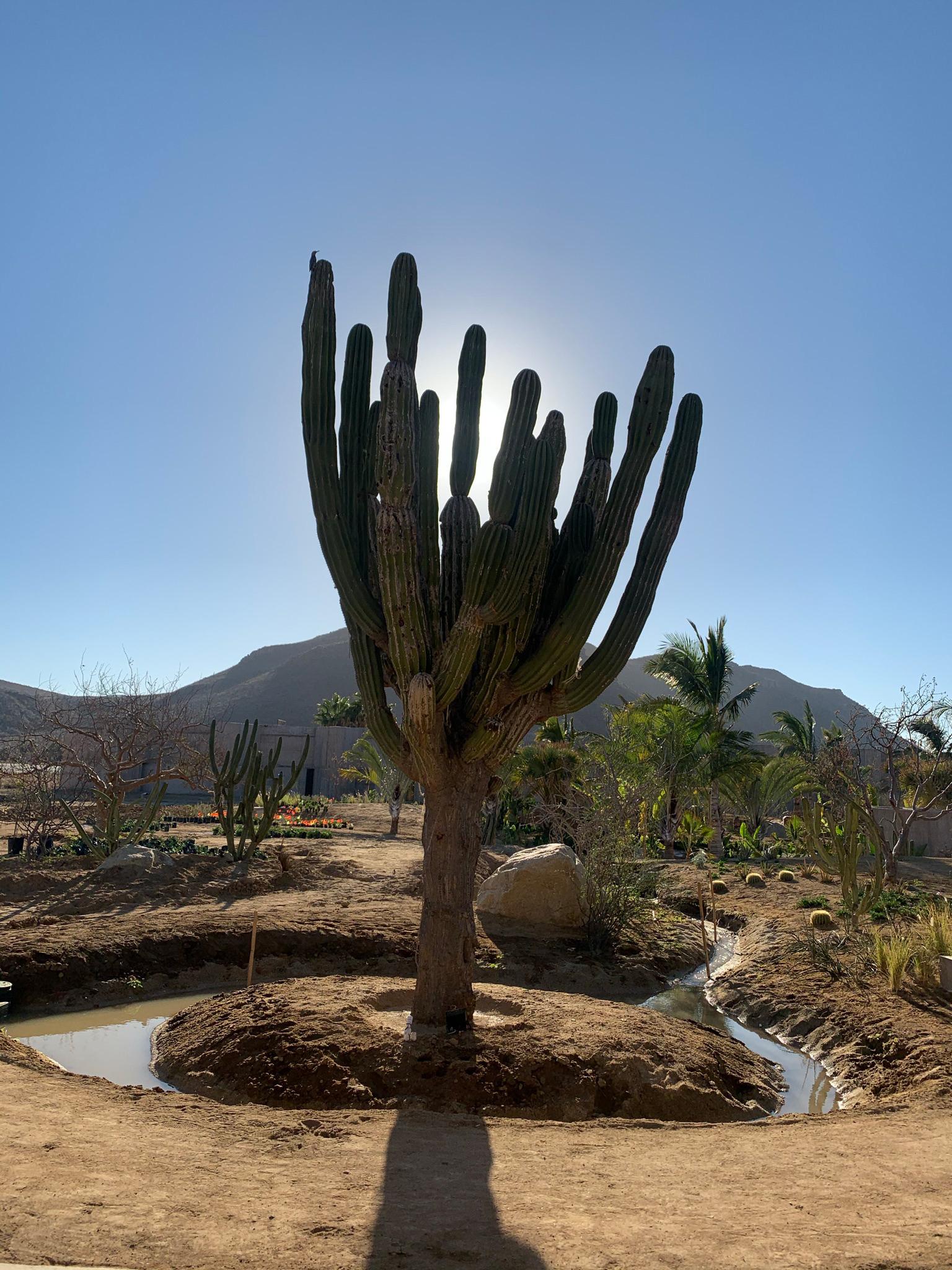 Отели в Мексике фото