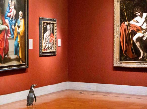 Экскурсия для пингвинов: коллаб музея и зоопарка