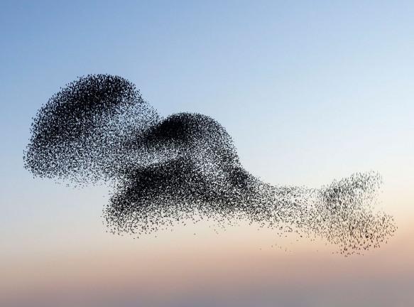 Птицы над датскими болотами в фотопроекте Сорена Солкера