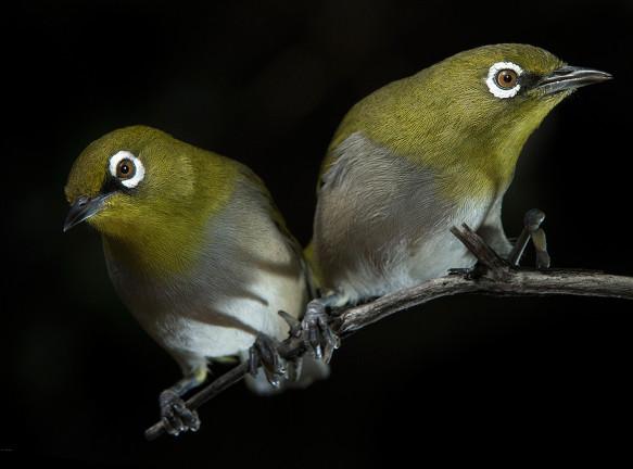 Портреты птиц в фотообъективе Стива Бенджамина