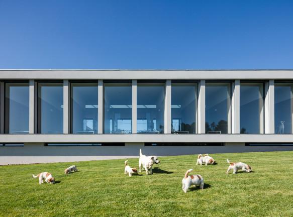 Отель для кошек и собак в Португалии