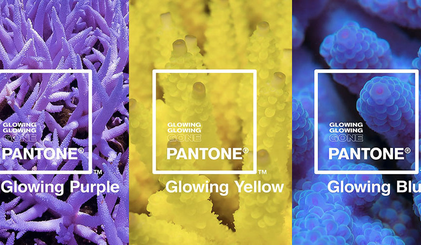 Цвета 2019 года: три оттенка свечения кораллов