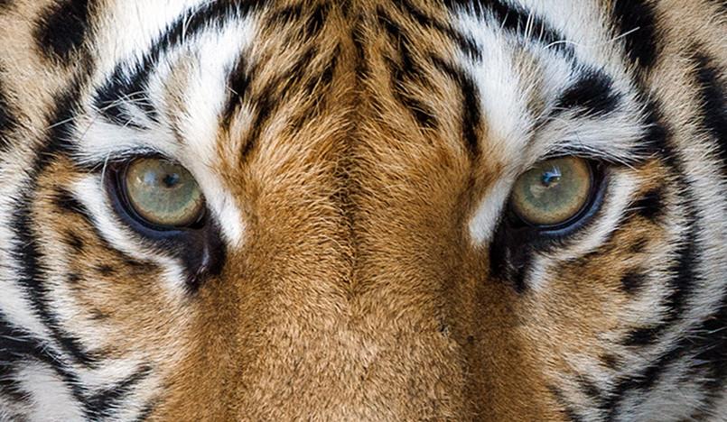 Цвет 2020: 9 оттенков исчезающих видов животных