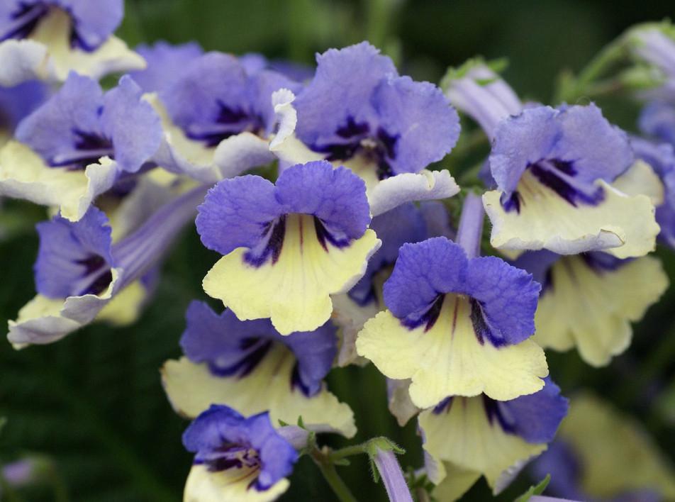 10 лучших растений Chelsea Flower Show