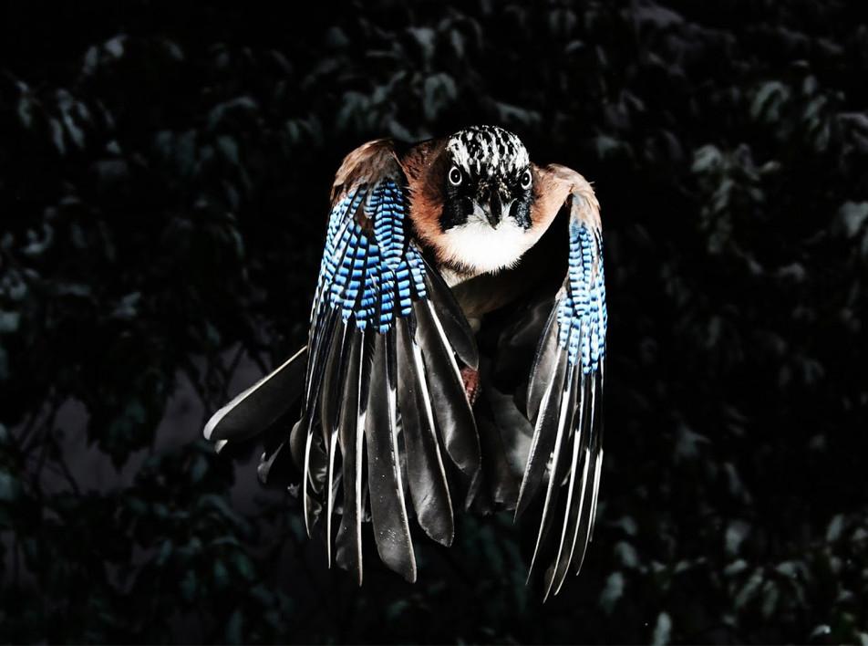 Фонд Cartier приглашает послушать звуки дикой природы