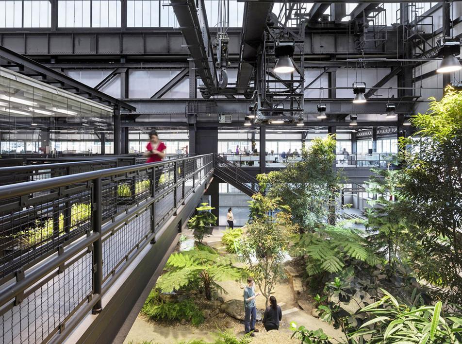 MN DPC: первобытный лес в офисе