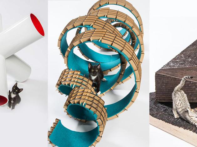 Архитекторы — котикам