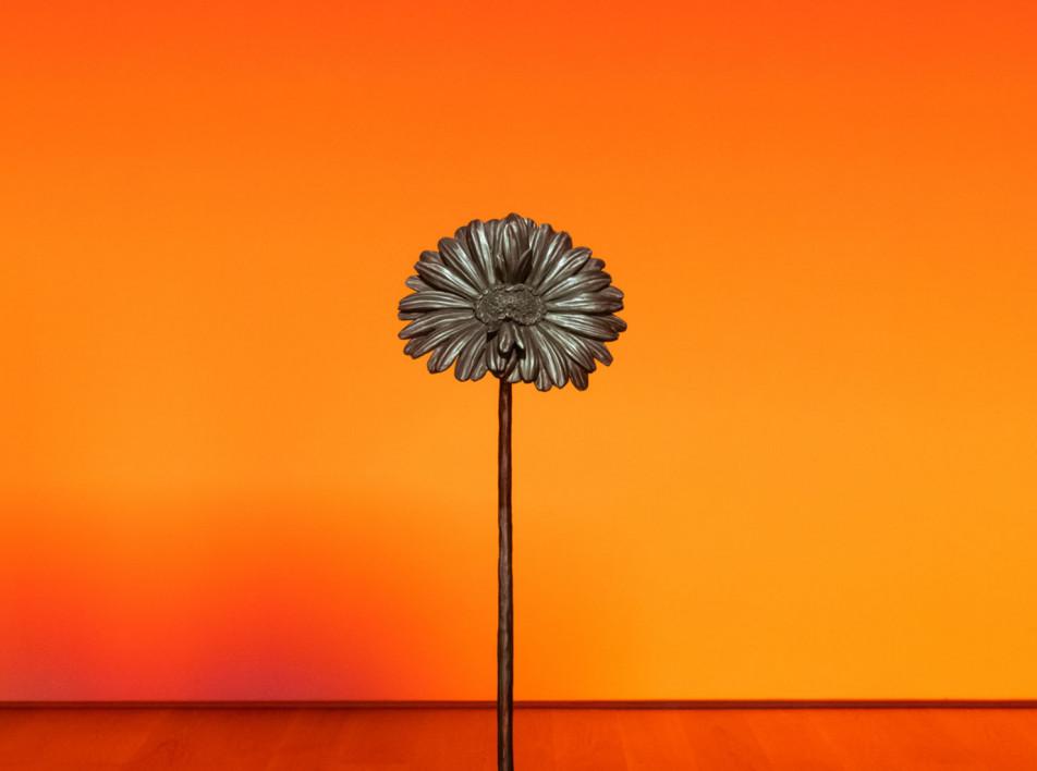 Невероятный гербарий Лорана Грассо