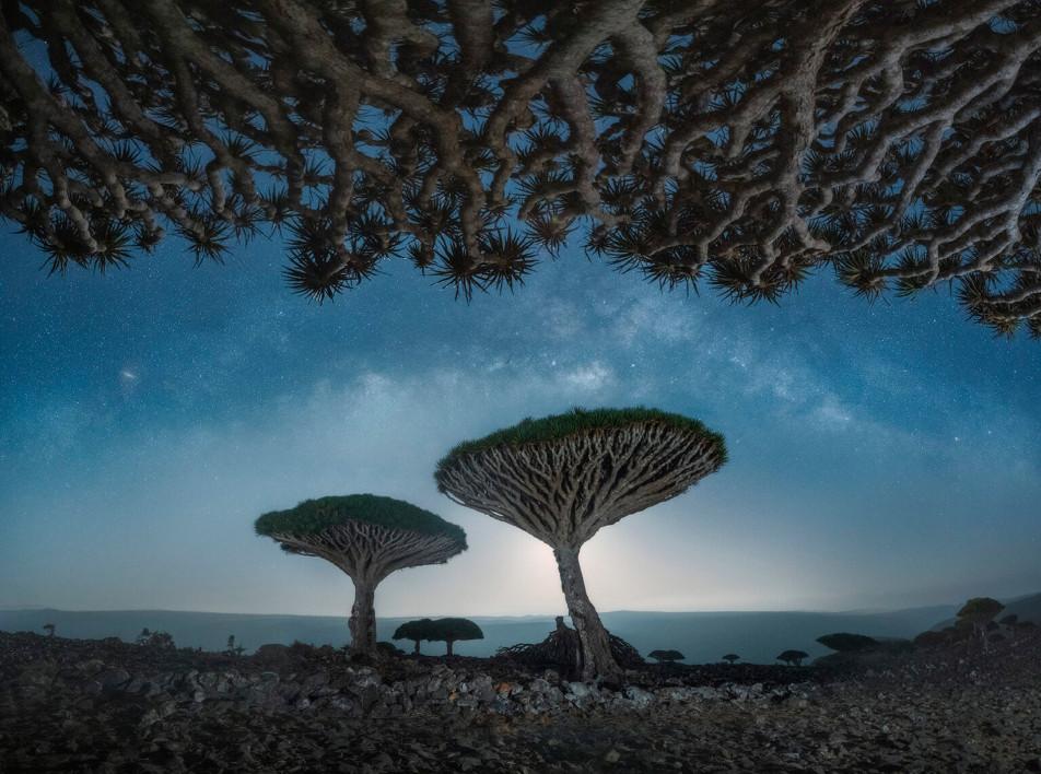 Фотограф Даниил Коржонов: драконовы деревья на Сокотре