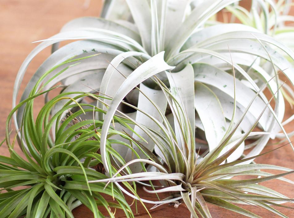 Растения в интерьере: 4 причины устроить домашний сад