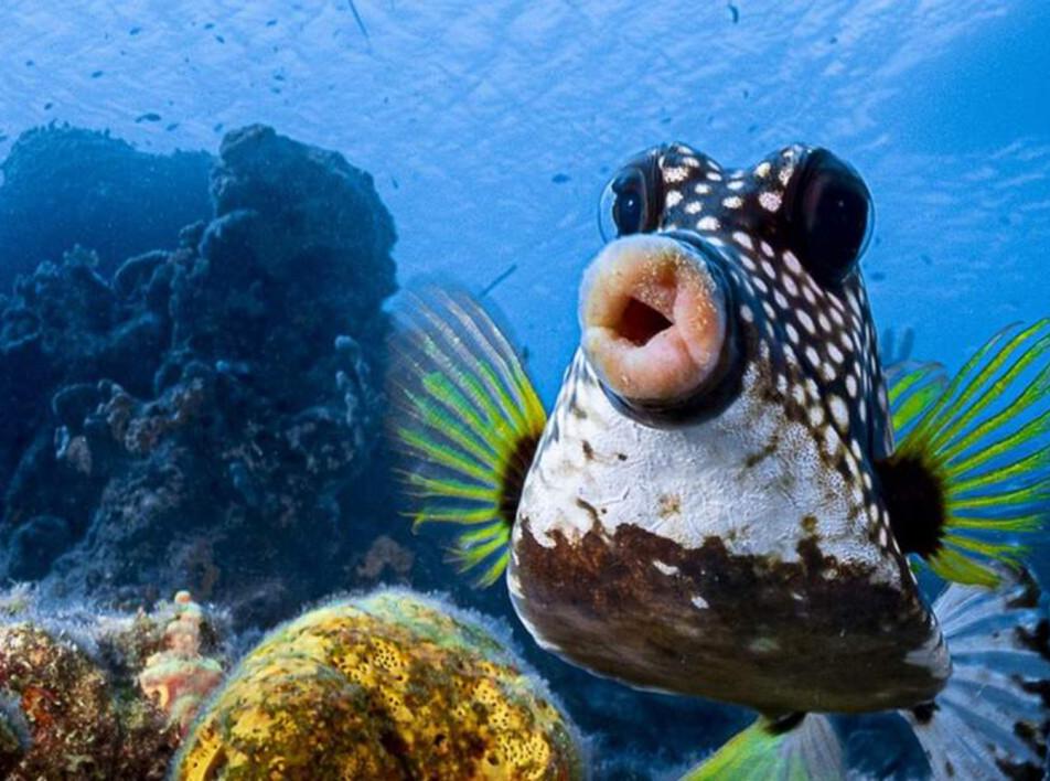 Comedy Wildlife Photography Awards 2021: смешные животные